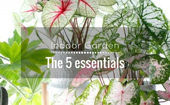 Indoor Garden: The 5 essentials