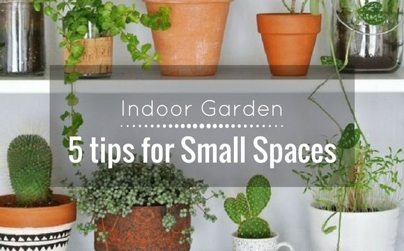 Indoor garden: 5 tips for small spaces
