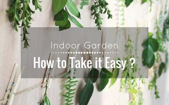 Indoor garden: How to take it easy?
