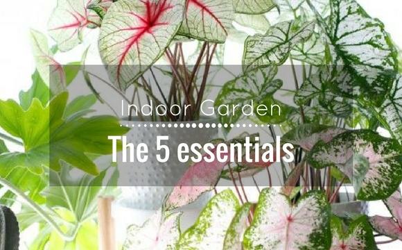 Indoor Garden: The 5 essentials